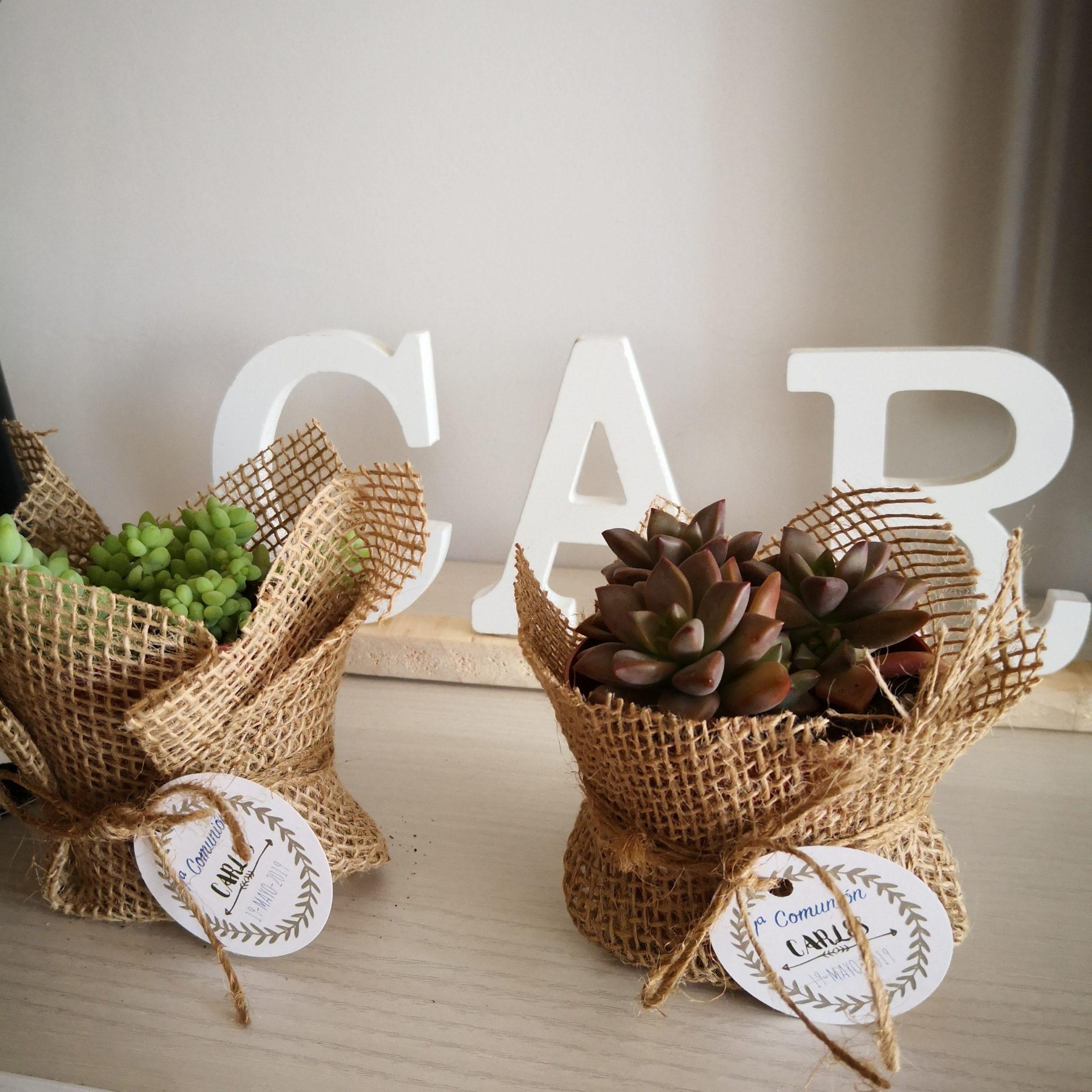 Detalle sobremesa con plantas suculentas