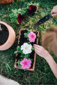 Planta petunia para el verano