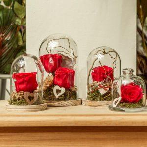Rosa roja preservada. Urna cristal y madera