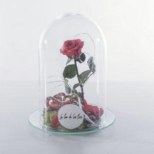 Rosa roja preservada. Urna cristal