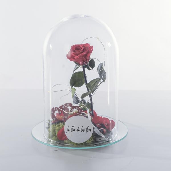 Rosa roja preservada en urna de cristal